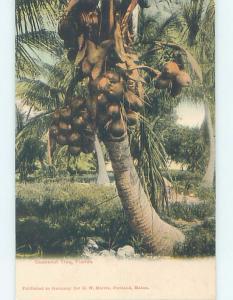 Pre-1907 COCONUT TREE State Of Florida FL hp9436-12