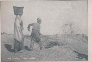 India Indian Digging Winnowing The Corn Antique Farm Farming Postcard