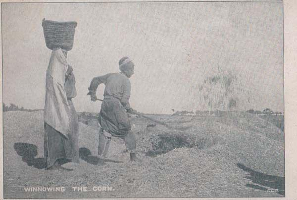 India Indian Digging Winnowing The Corn Antique Farm Farming Postcard