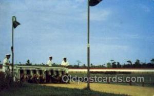 Volusia Kennel Club, Daytona Beach, FL USA Dog Racing, Old Vintage Antique Po...
