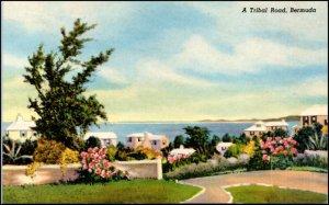 A Tribal Road Bermuda Postcard
