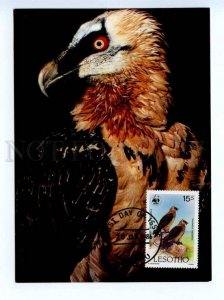 d419379 LESOTHO 1986 year WWF Bird Eagle maximum card