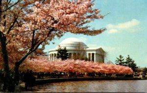 Wasgington D C Jefferson Memorial With Cherry Blossoms