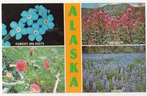 Wild-Flowers, Alaska