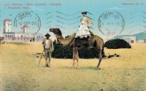 Spain Las Palmas Gran Canaria Camello 03.42