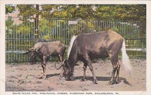 Pennsylvania Philadelphia White Tailed Gnu Zoological Garden Fairmount Park