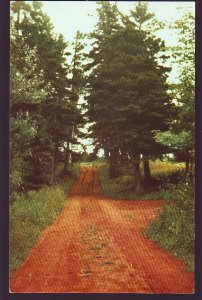 P1566 vintage unused prince edward island lovers lane green gables canada