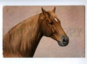 189411 Head of HORSE w/ Star Vintage FED #449 postcard