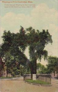 Massachusetts Washington Elm Cambridge
