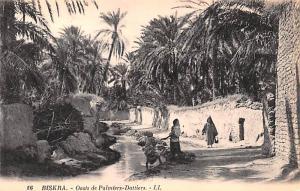 Biskra Algeria, Alger, Algerie Oasis de Palmiers Dattiers Biskra Oasis de Pal...