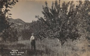 H33/ Silt Colorado RPPC Postcard c1910 Apple Orchard on Pary's Place Man