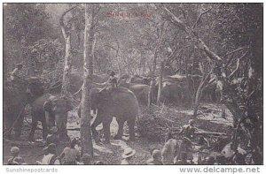Elephants In Kraal Ceylon Sri Lanka