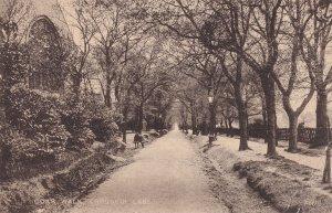 Coxs Walk Lordship Lane London Postcard