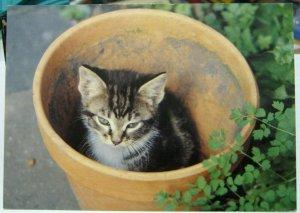 Postcard cat Kitten in a flower pot - unposted