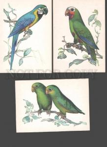 088810 Colorful PARROT Birds Collection of 16 different cards