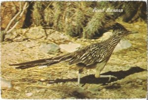 The Road Runner Clown of the West Photo by Ed Kumler 1970's Vintage Postcard