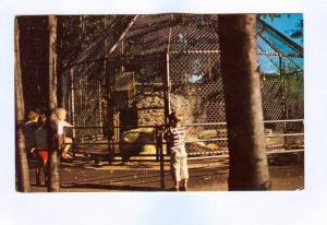 White Bears' Cage, Granby, Quebec, Canada, PU-1983