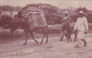 Dos Hombres Caminando En La Calle Con Un Burro, Mexico, 1910-1920s