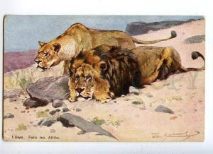 131777 LIONS Africa HUNT vintage colorful PC