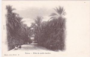Algeria Biskra Allee du jardin Landon