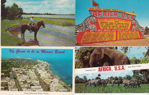 Auction Florida 50 Different Chrome Postcards Starting At 9.99 Lot 2