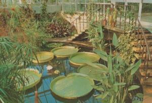 Victoria Regina Lily Chatsworth Planted 1849 Vintage Derby 1970s Postcard