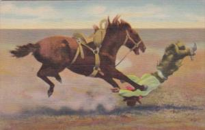 Cowboy With Horse Spills and Thrills With A Bucking Broncho 1955 Curteich