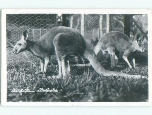 old rppc NICE VIEW Postmarked Sydney Australia i3482