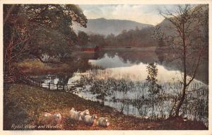 Cumbria Rydal Water and Wansfell, flock