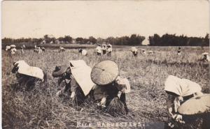 Korea ??? Rice Harvesters Real Photo