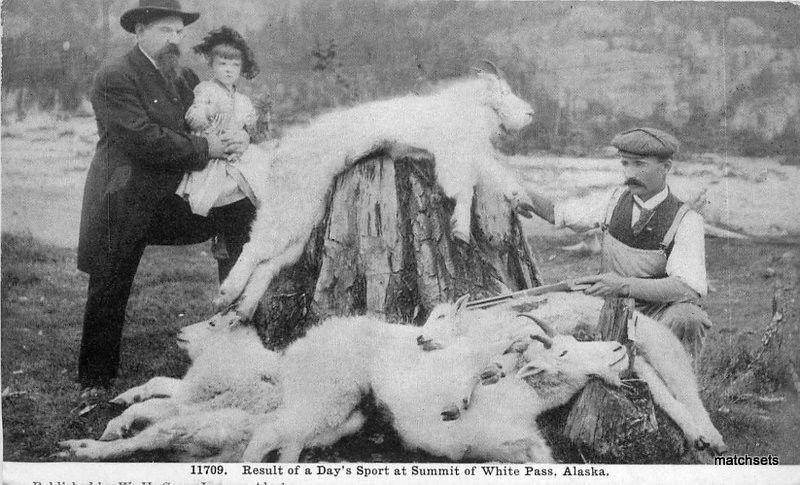 C-1910 Goat Pelts hunting Summit of White Pass Alaska postcard 8325