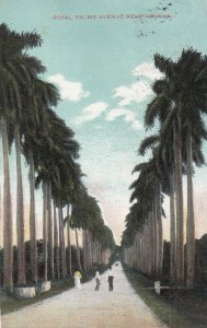 HAVANA, Cuba, PU-1910; Royal Parlms Avenue