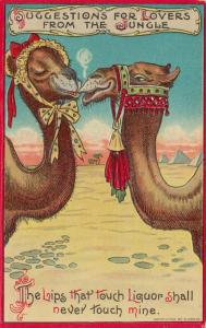 Couple of Camels flirting, 1900-10s; Drunk trying to steal a kiss