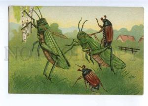 244311 GRASSHOPPER & May BEETLE Fantasy Vintage EMBOSSED PC