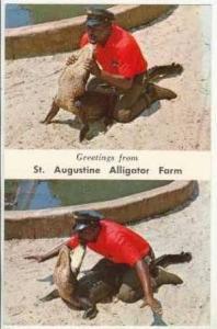 2-View,Stunt,Alligator Farm, St.Augustine, Florida,40-60s