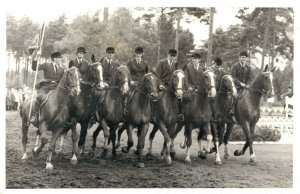 Hippique - sport horses group horse riders 1965 Real Photo 03.95