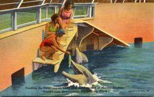 Florida Marineland Feeding Porpoises By Hand At Marine Studios