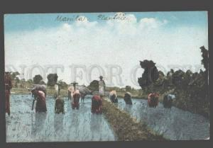 098037 Philippines MANILA Rice Planting view Vintage PC