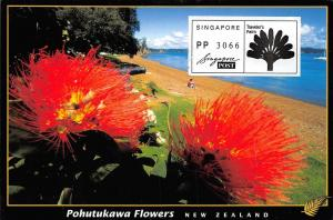 New Zealand Pohutukawa flowers on Russell Waterfront Bay of Islands