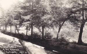 RP, Reincarnation Of The Redwood, Long Tree, Redwood, California, 1930-1950s
