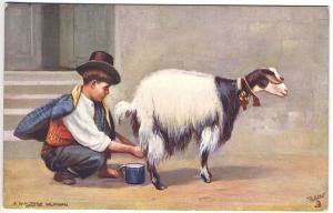 Raphael Tuck Wide Wide World Series Maltese Milkman Goat Postcard