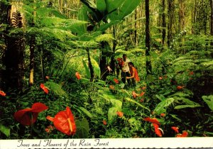 Hawaii Rain Forest Red Anthurium Giant Tree Ferns and Wild Banana Trees 1998