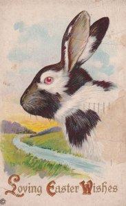 EASTER; PU-1921; Loving Wishes, Portrait of black & White Rabbit, Lazy River ...