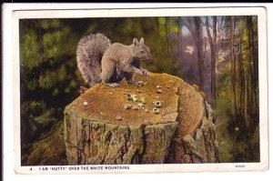 Squirrel,  White Mountains, Used Lakeport Station New Hampshire 1927
