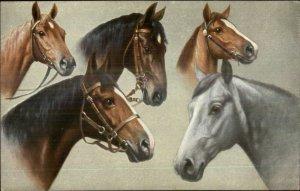 Beautiful Horses All Colors TSN Series 1818 c1910 Postcard