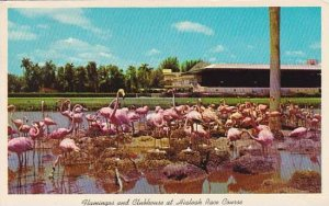 Florida Miami Flamingos And Clubhouse At Hialeah Race Course 1965