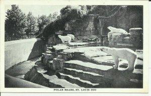 Polar Bears At St.Louis Zoo