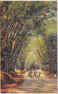 Jamaica, Jamaique Post card Old Vintage Antique Postcard Bamboo Avenue St. El...