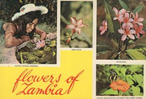 Munda Wanga Gardens Flowers Of Zambia Butterfly Postcard