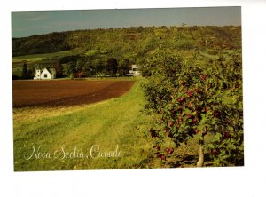 Large 5 X 7 inch Apple Orchard, Annapolis Valley Nova Scotia